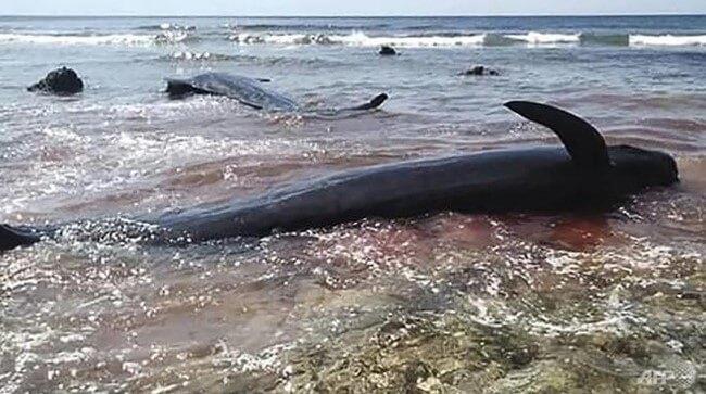 Ô nhiễm môi trường biển có thể làm tuyệt chủng một số sinh vật
