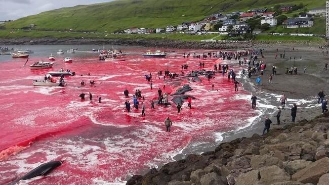 Hiện tượng thủy triều đỏ còn được gọi là tảo nở hoa