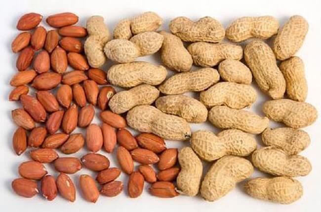 Lạc rất giàu protein