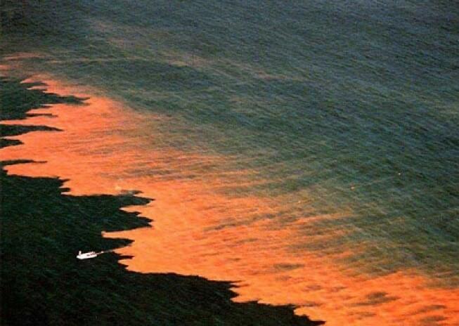 Thủy triều đỏ không nhất thiết phải có màu đỏ