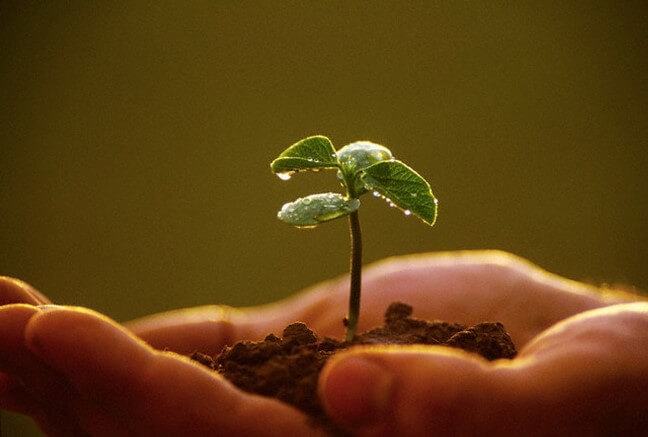 Trồng nhiều cây xanh giúp giảm bớt hiệu ứng nhà kính
