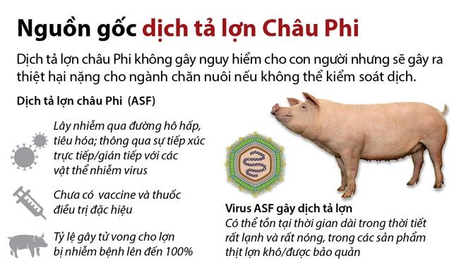 Dịch tả lợn có nguồn gốc từ châu Phi