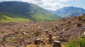 Hoạt động phá rừng