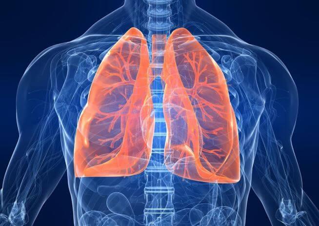 Hệ hô hấp được cải thiện
