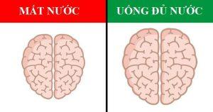 Bạn có biết nước và bộ não có liên hệ chặt chẽ với nhau