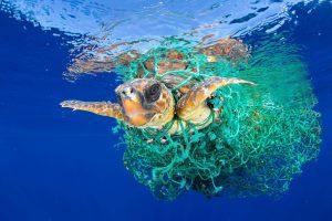 Tất cả nilon nhựa to nhỏ đều làm hại sinh vật