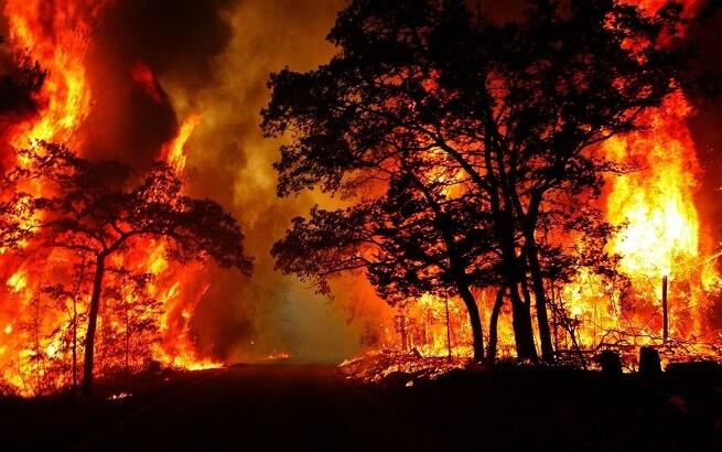 Nguyên nhân và hậu quả của cháy rừng