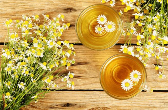 Những lợi ích của trà hoa cúc La Mã