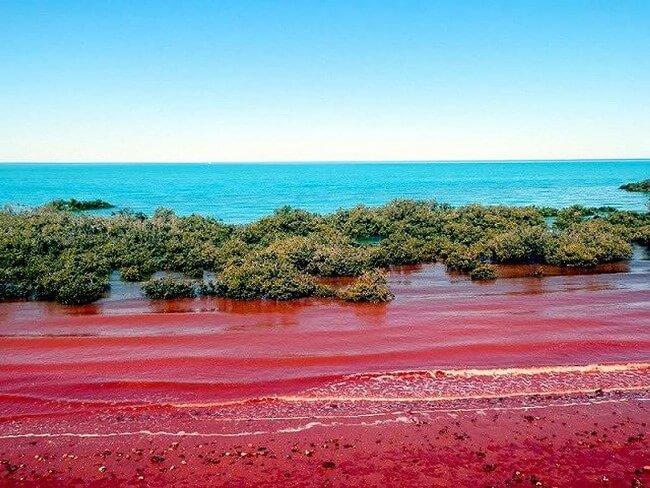 Thủy triều đỏ là gì