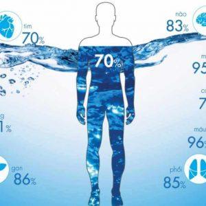 Nước là thành phần chủ yếu của cơ thể
